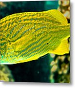 Yellow Fellow Metal Print