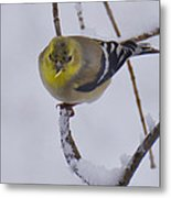 Yellow Finch Cold Snow Metal Print