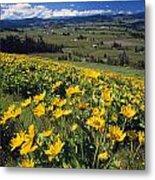 Yellow Flowers Blooming, Hood River Metal Print