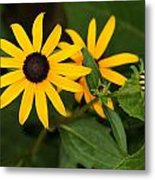 Yellow Flowers Metal Print