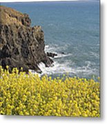 Yellow Flowers On The Northern California Coast Metal Print