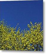 Yellow Flowers Tree Metal Print