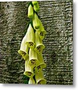 Yellow Foxglove Flowers Metal Print