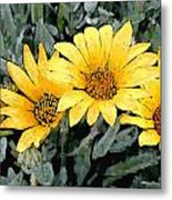 Yellow Gazanias Metal Print