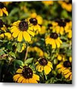 Yellow Golden Flowers 1 Metal Print