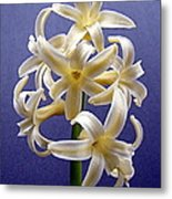 Yellow Hyacinth Metal Print