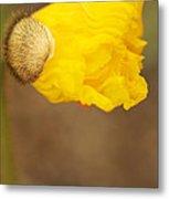 Yellow Icelandic Metal Print