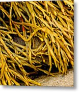 Yellow Kelp Metal Print
