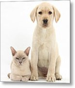 Yellow Lab And Burmese Cat Metal Print