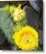 Yellow Lace Unveiled Metal Print