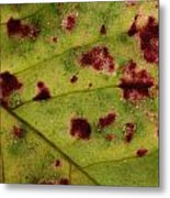 Yellow Leaf With Red Spots 2 Metal Print
