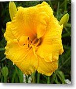 Yellow Lily - Oshun Metal Print