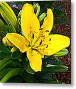 Yellow Lily Beauty Metal Print