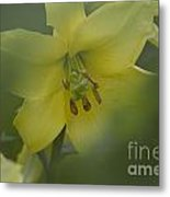 Yellow Lily Flower Metal Print