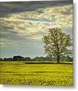 Yellow Meadow Metal Print