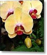Yellow Moth Orchids Metal Print