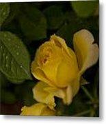 Yellow N Leaf Metal Print