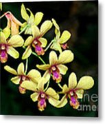 Yellow Orchid Cascade Metal Print