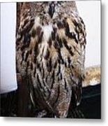 Yellow Owl Eyes Metal Print