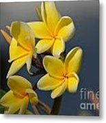 Yellow Pinwheels Metal Print