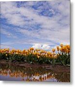 Yellow Reflections Of Tulips Metal Print