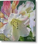 Yellow Rhododendron With Buds Metal Print
