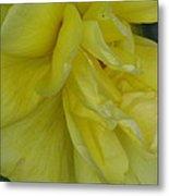 Yellow Rose 02 Metal Print