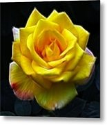 Yellow Rose In The Moonlight Metal Print