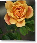 Yellow Rose Of Baden Metal Print