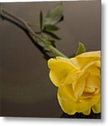 Yellow Rose Of Friendship Metal Print