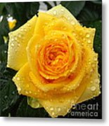 Yellow Rose With Water Droplets Metal Print