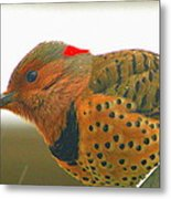 Yellow Shafted Flicker Metal Print