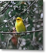 Yellow Songbird Metal Print