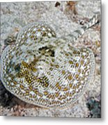 Yellow Stingray In Caribbean Sea Metal Print