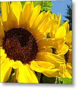 Yellow Sunflowers Art Prints Summer Sunflower Metal Print