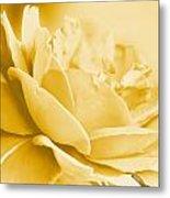 Yellow Tone Rose  Metal Print