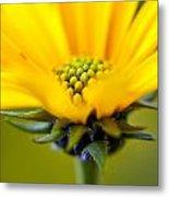 Yellow Wild Flower - Side Metal Print