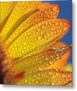 Yellow Wild Flower Metal Print