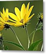 Yellow Wildflower 2 Metal Print