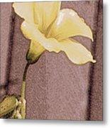 Yellow Wood Sorrel Metal Print