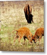 Yellowstone Bison Metal Print by Ellen Heaverlo
