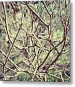 Yet To Spring Metal Print
