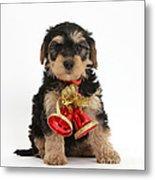 Yorkipoo Pup Wearing Christmas Bells Metal Print