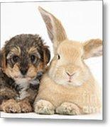 Yorkipoo Pup With Sandy Rabbit Metal Print