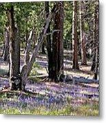 Yosemite Lupin Metal Print