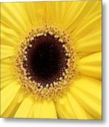 You Are My Sun Metal Print