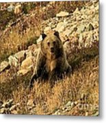 You Whistling At Me? Metal Print