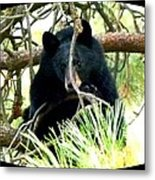 Young Black Bear Metal Print