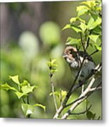 Young Blue Grosbeak Metal Print
