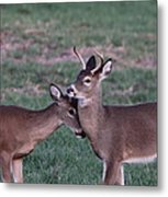 Young Bucks Metal Print